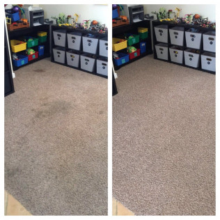 carpet pet stain removal glendale az